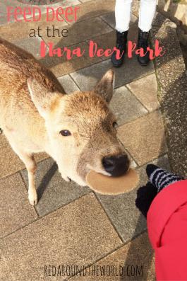 feed-deer