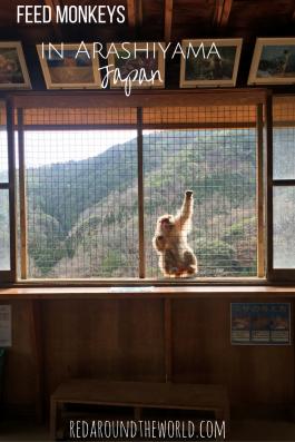feed-monkeys