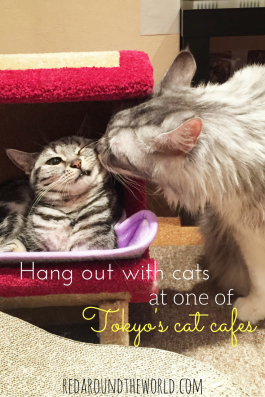 cuddle-cats
